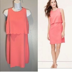 LOFT scalloped pink dress. Size 0P